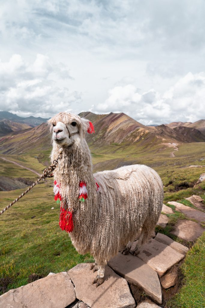 Alpaca Alternative Rainbow Mountain Day Trip from Cusco